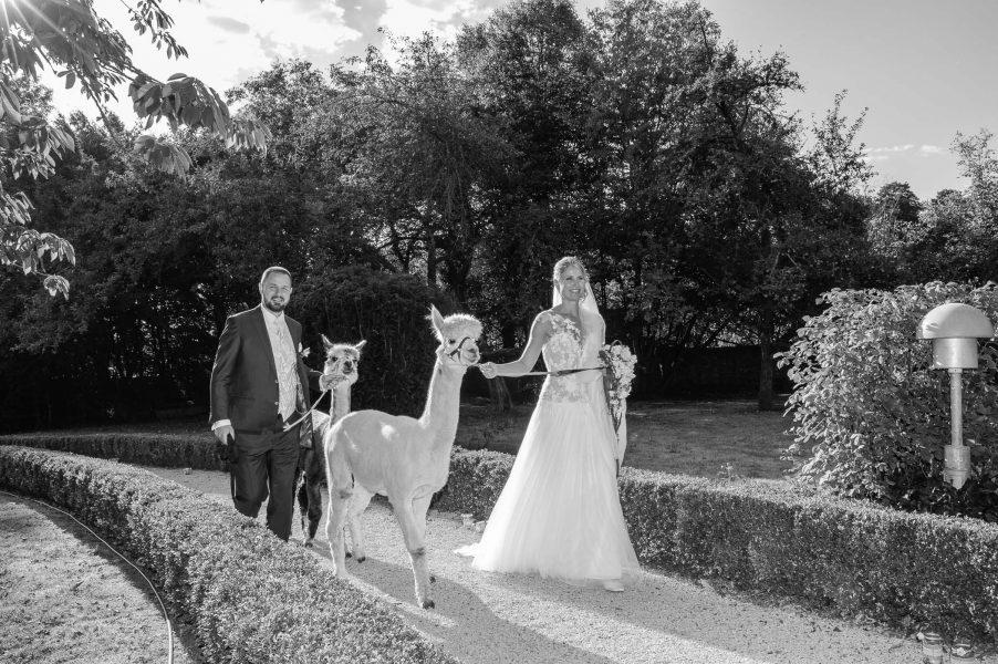 Hochzeitspaar mit Alpakas
