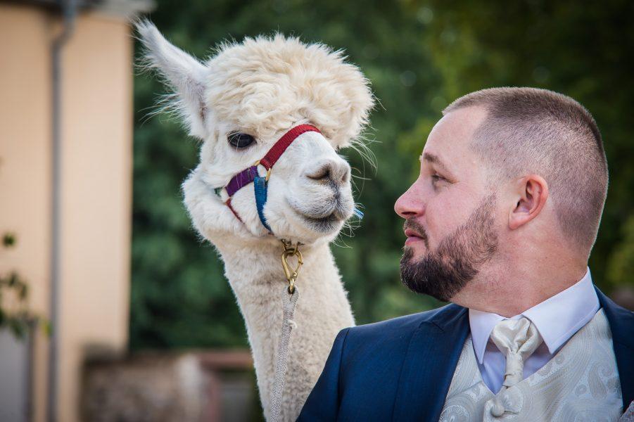 Hochzeit Mal Anders Heiraten In Der Feichthub Mit Alpaka
